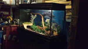 GREAT PRICE!!!  90 GALLON AQURIUM  AND SOLID STAND MUST GO