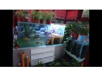 4ft fish tank full set up with 5 large turtles