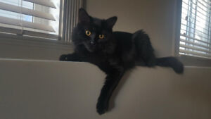 Looking for a loving home for cat