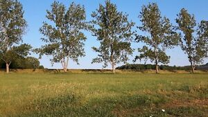 Build your own home on .46 acre lot! Kitchener / Waterloo Kitchener Area image 3