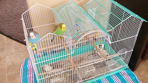Two Budgies with large cage and toys