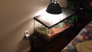 """6"""" Goliath tarantula and set up $300"""