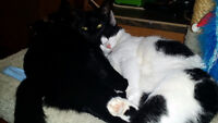 Amazing Sisters--- Free to loving home
