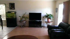 $1300 Fully furnished main floor-Mckenzie Towne SE