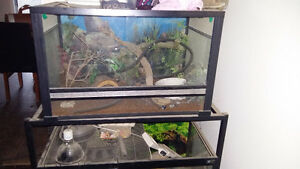 Two tanks and tank stand everything included bedding lights plan Kitchener / Waterloo Kitchener Area image 2