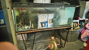 50 Gallon Fish Tank with MetalStand