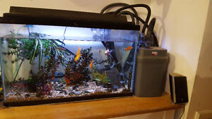 30 Gallon Aquarium (2yr Old) With Fluval 304 Canister Filter