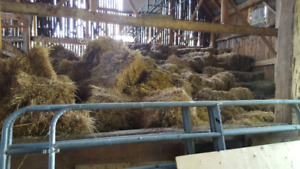 Older hay for sale