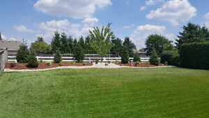Lawn Care / Grass Cutting / Lawn Maintenance / Fall Clean Up London Ontario image 1