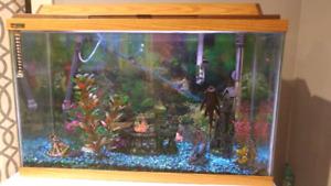 Established 20g fish tank full setup