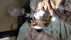 2 free bonded sister cats
