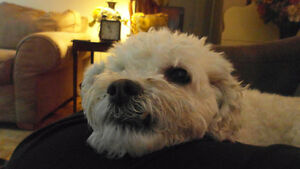 DOG/PUPPY/WALKING/BOARDING - Oakville, BURLINGTON/MILTON