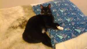 young female cat looking for loving and caring forever home