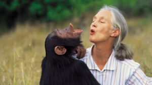 Desperately wanted: Jane Goodall tickets!!!!