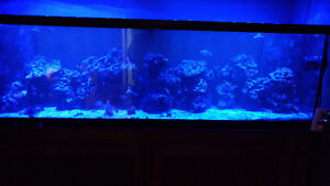 120 gallon salt water fish tank set up
