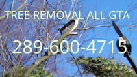 Professionsl Tree Removal Best Price. 289-600-4715.
