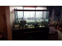 Terrapins & Tank for sale