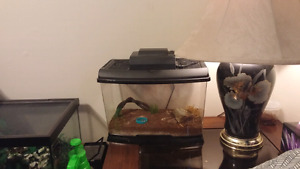 Scorpion and set up $50