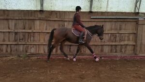 horseback riding lessons with certified EC Coach indoor arena