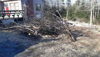 We Remove Everything From Trees/Brush & Junk Removal Services