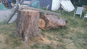 Large Maple Trunk