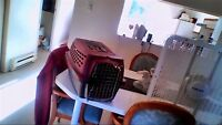 cat or small animal cage asking 15 phone 705 855 3834