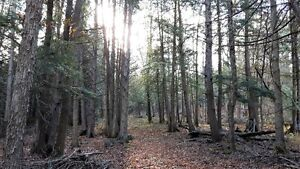 FANTASTIC 47 ACRE PARCEL ON THE EDGE OF TOWN Kitchener / Waterloo Kitchener Area image 8