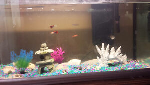 20 gal Fish tank , tropical fish and accessories included