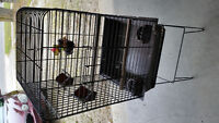Hagen Large Bird Cage with stand