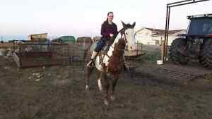 I have a paint gelding for sale
