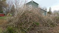 Wanted branches hauled away or chipped up