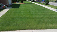 Grass Cutting / lawn Care / Lawn Maintenance