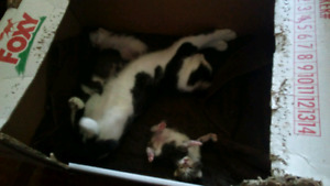 Mamma cat is due very soon, be involved with your new kittens!<3