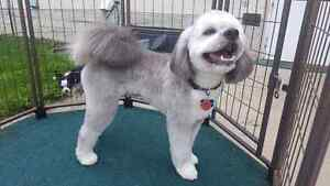 Small Breed in Home Dog Grooming- North Edmonton Groomer