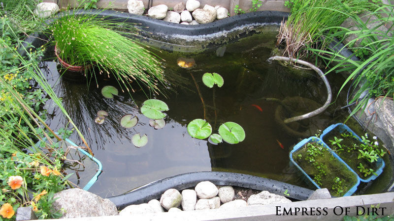 Pond plants require various depths to grow properly