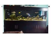 5x30x28'' marine tropical fish tank in brand new condition (delivery/installation)