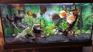 Sold - 90 Gal - Tank and Stand   48x18x25