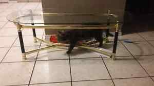 Glass/brass coffee table. Need gone ASAP