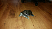 Red Eared Slider Turtle - with everything included!
