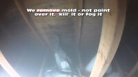 Mold Inspections, Mould Removal / Remediation in Cambridge.