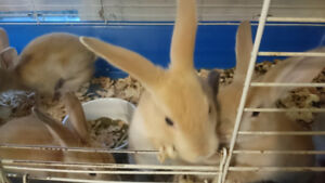 FREE BABYS BUNNIES FOR CHRISTMAS TO ANYONE THAT WANTS ONE