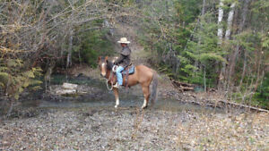 9yr old, 14.1hh Welsh mare