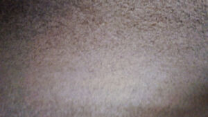 2 NEW carpets - 1 shag/textured and 1 commercial, underlay roll