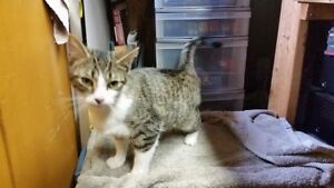Affectionate 7 Month Old Female- Spayed, Vaccinated, Dewormed