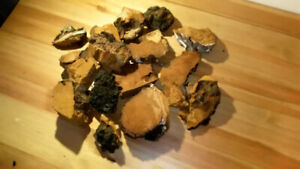 For Sale Wild Chaga. Available for pick up in Richmond Hill