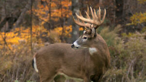Wanted: Hunting land for Whitetail deer purposes (Southeastern)