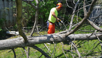 ☆ Tree Service / Removal / Disposal ☆