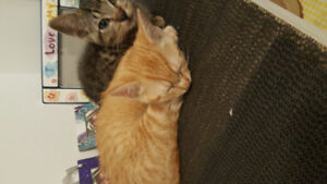 Beautifull kittens and cat need a good home