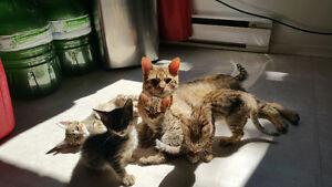 F4 Savannah kittens for sale!