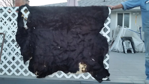 Cow hide for sale